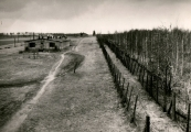 Show larger image above: Afforested prisoners' field no. 1, mid-50's